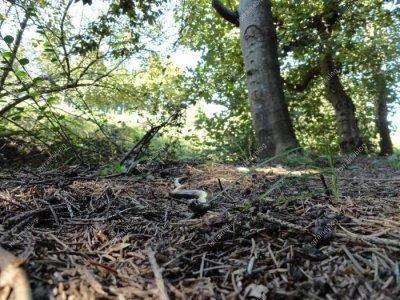 rencontre du jour, l'orvet par Béa pour lorraineblog