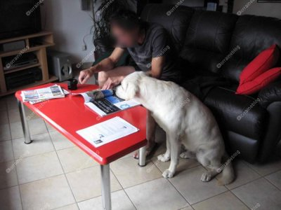 chien instruit par Béa pour lorraineblog