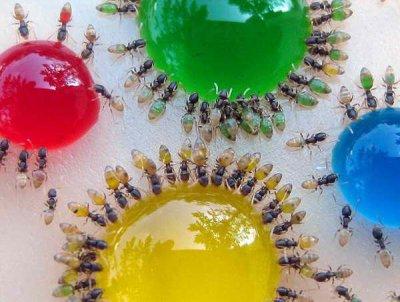 Fourmis multicolores par Béa pour lorraineblog