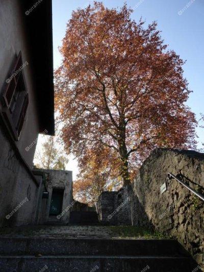 Le Château de Sarreguemines - 2ème partie - par Béa pour lorraineblog