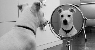 Miroir-test vu par Béa pour lorraineblog