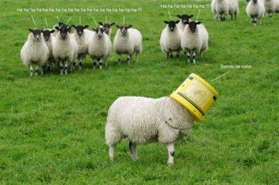 Mouton vu par Béa pour lorraineblog