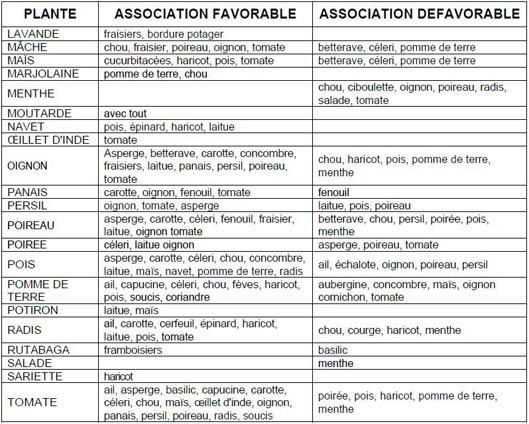 Le potager de b a pour lorraineblog lorraineblog - Association des legumes au potager ...