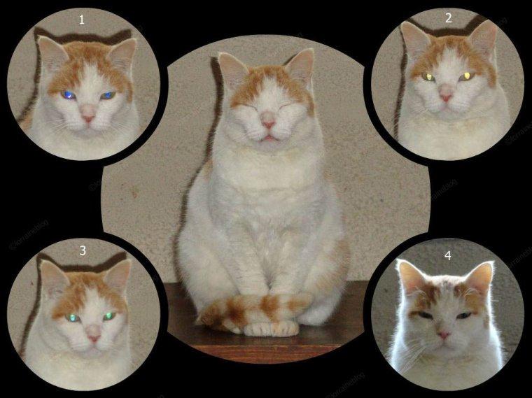 Quelle est la couleur des yeux de ce chat ? par Béa pour lorraineblog