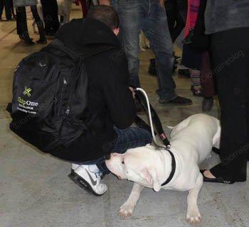 Exposition canine internationale - suite et fin - par Béa pour lorraineblog