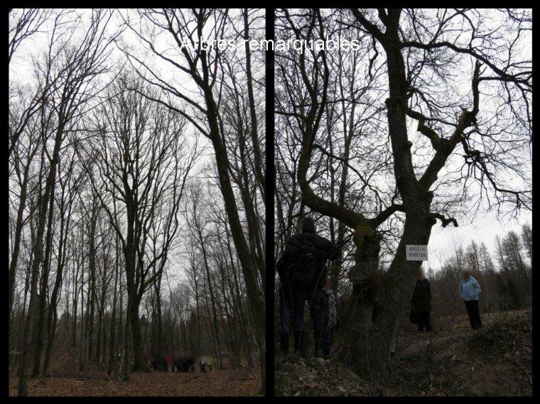 A la découverte de la Forêt de Sitterswald par Béa pour lorraineblog