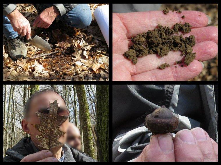 A la découverte de la Forêt du Buchholz par Béa pour lorraineblog