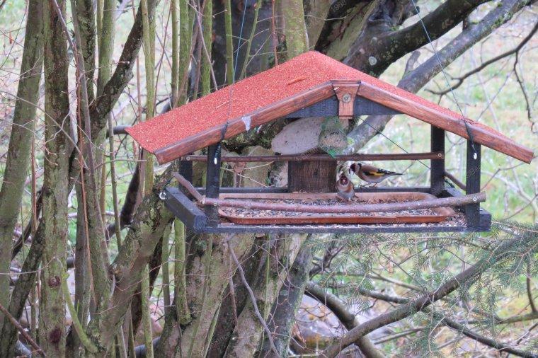 Les oiseaux de la mangeoire à Béa - 01- pour lorraineblog