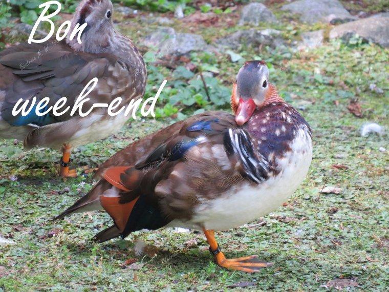 Bon week-end S37 par Béa pour lorraineblog