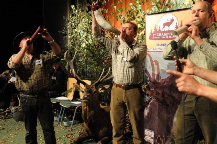Brame du cerf et 1er champion de France lu par Béa pour lorraineblog