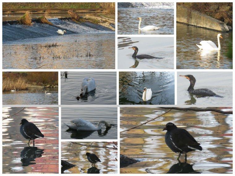 Oiseaux sarregueminois par Béa pour lorraineblog