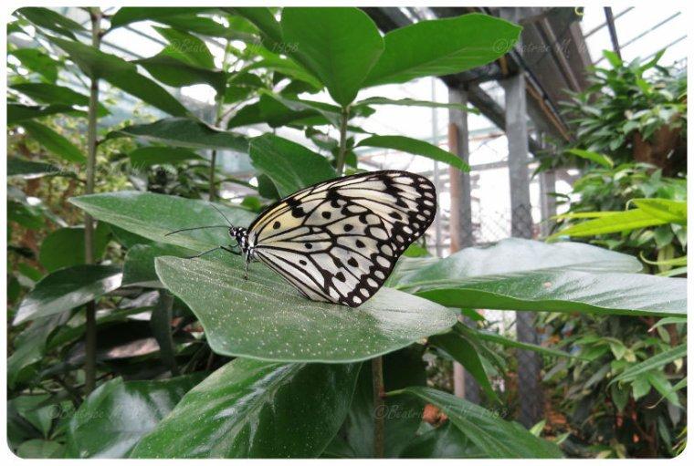 Jardin des papillons - 02 - vu par Béa pour lorrarineblog