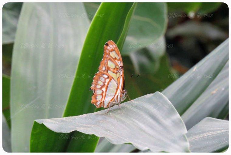 Jardin des papillons - 03 - vu par Béa pour lorrarineblog