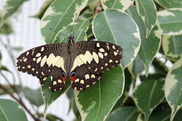 Jardin des papillons - 04 - vu par Béa pour lorrarineblog