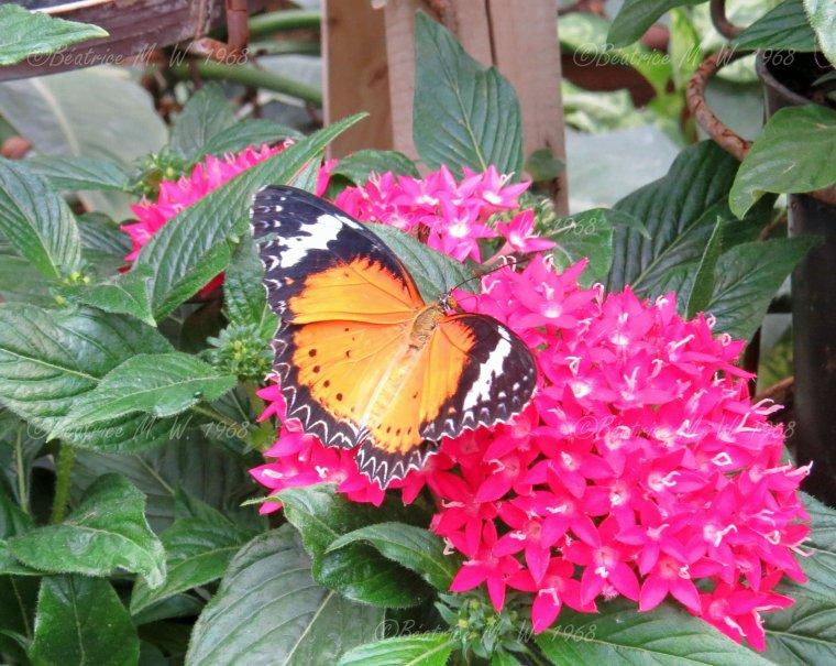 Jardin des papillons - 05 - vu par Béa pour lorrarineblog