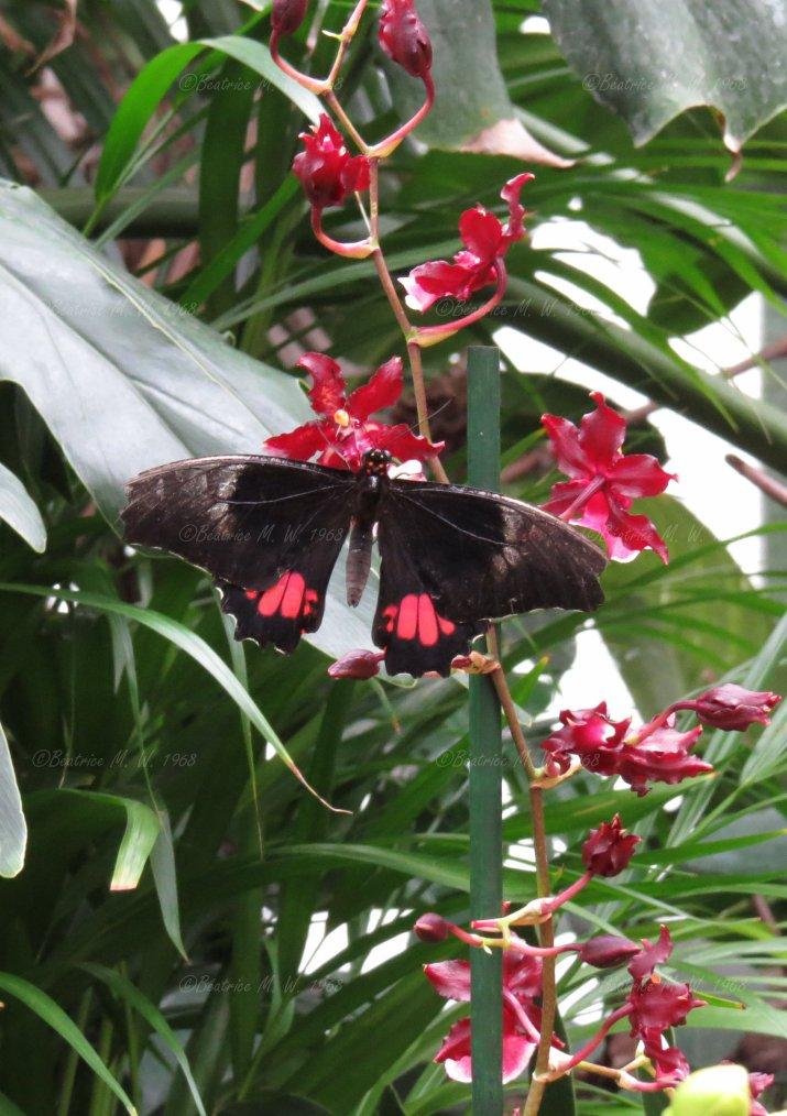 Jardin des papillons - 06 - vu par Béa pour lorrarineblg