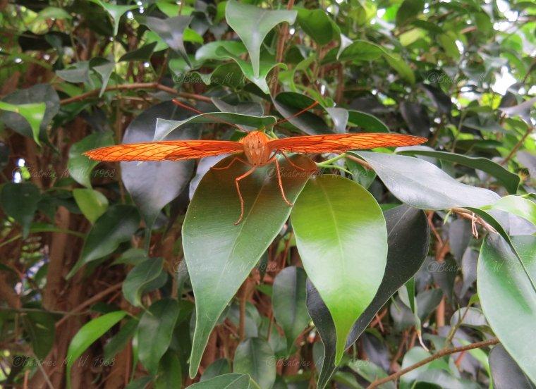 Jardin des papillons - 07 - vu par Béa pour lorrarineblg