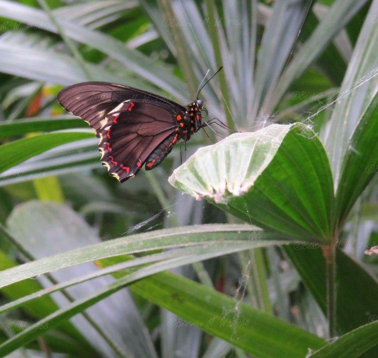 Jardin des papillons - 08 - vu par Béa pour lorrarineblg
