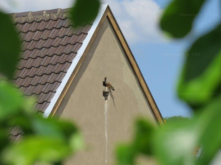"""Photo du jour S20 """"Faucon crécerelle"""" par Béa pour lorraineblog"""