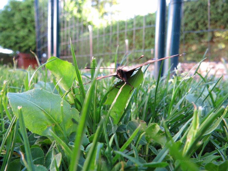 Photo du jour S21' Papillon par Béa pour lorraineblog