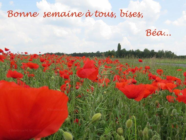 Bonne semaine S23 par Béa pour lorraineblog