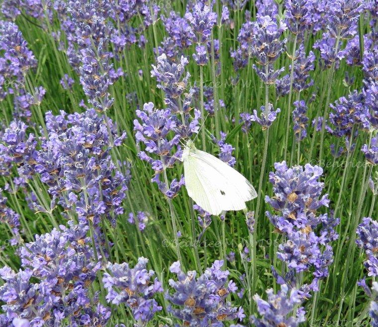 Photo du jour S25 par Béa pour lorraineblog