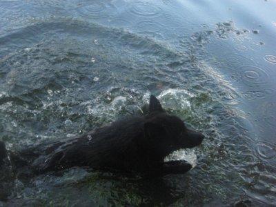 les Schipp dans l'eau