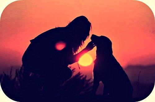 Dans la vie,le plus sûr des amis. Le premier à vous accueillir,le premier à vous défendre,celui dont le coeur honnête appartient pour toujours à son maître,qui travaille,ce bat,vie et respire pour lui seul.Georges Gordon, Lord Byron