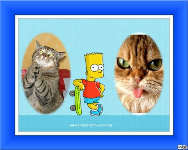 Mes Chansons Préférées + Photos de chats drôle
