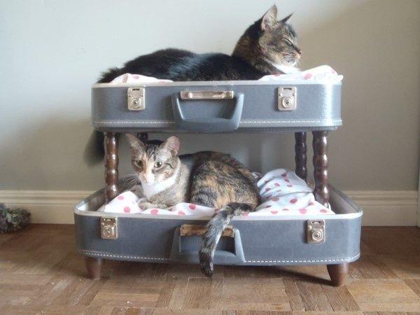hôtel de luxe pour chat