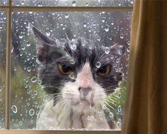 """""""Lâche ton cell pis regarde dehors laisse-moi entrer tu vois bien il mouille!!"""""""
