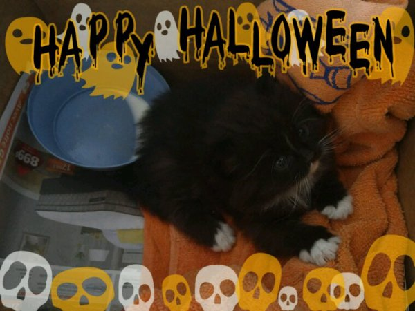 Halloween montages