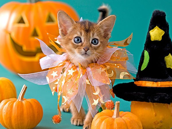 Gif et photos d'Halloween...