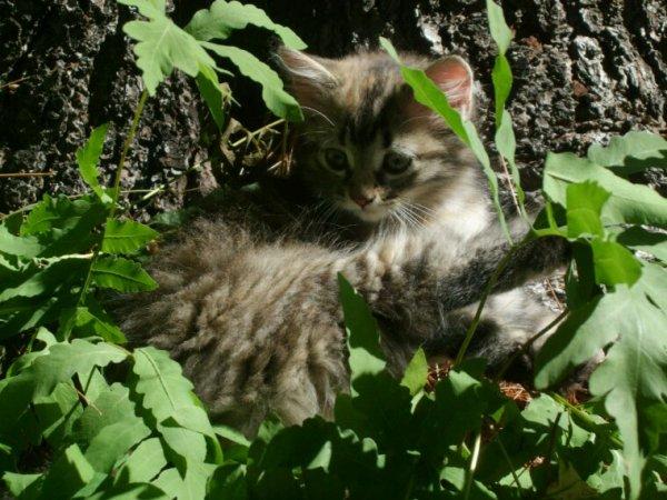 Un chat que j'ai vu dehors cet été