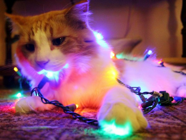 Christmas cats Part 6