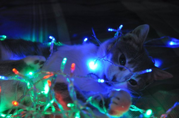 Christmas cats Part 7