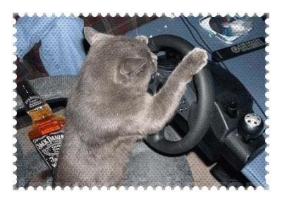 Oh non un autre chat qui conduit saoul au volant!!!!!