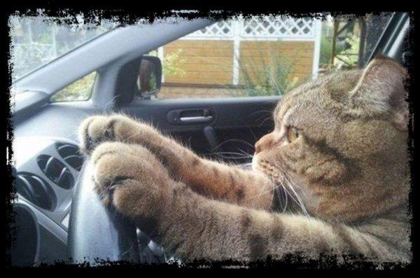 """""""Je conduis un auto mais ce que je préfère c'est les voitures de course"""""""