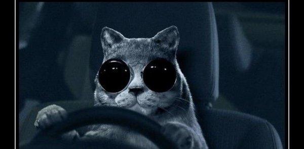 """""""C'est tu dangereux de conduire le soir avec des lunettes de soleil noires?"""""""