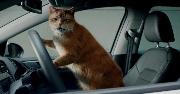 """""""Je dois encore klaxonner un autre catducteur dangereux au volant de son auto!"""""""
