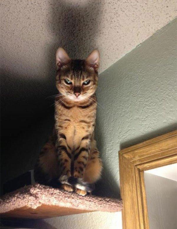 """""""Je suis un chat maléfique et je vous guette partout...""""£¢¤£¢¤£Gatto demone¤£¤£¤¢"""