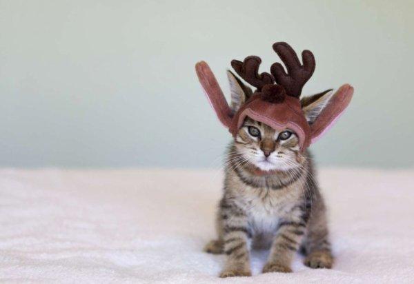 """""""Je suis tanné que mon maitre me mette des déguisements et des chapeaux de Noël!!"""""""