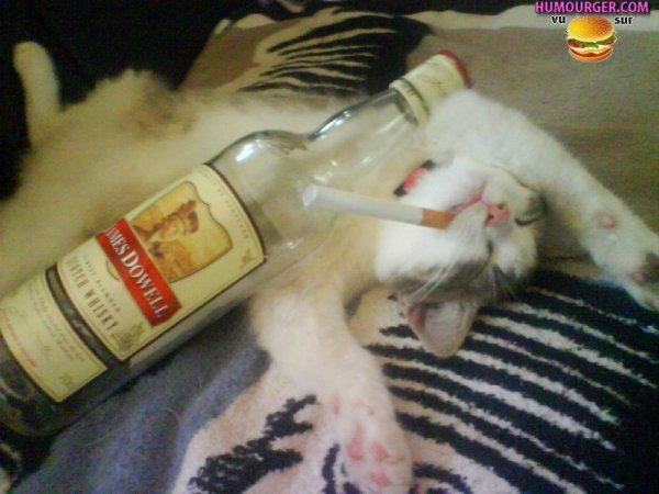 Joyeux Noël et buvez pas trop!