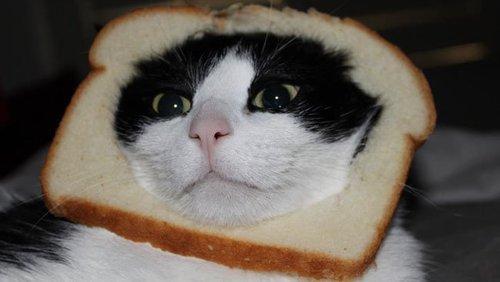 """""""Quoi tu veux manger une toast au chat Au secours!"""""""