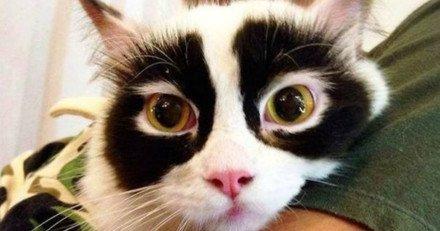 Le chat masqué voleur de banques...recherché par la police...