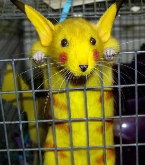 La nouvelle sorte de souris.Elle donne des chocs électriques pour pas que tu l'attrapes...