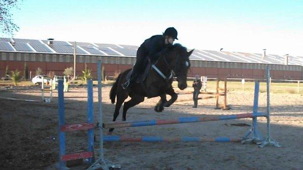 """""""Un cheval, le cheval de votre vie, vous fera mal une fois. Une seule fois. Et c'est le jour où vous devrez le laisser partir."""""""