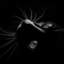 Blog de Lonely-LittleCat