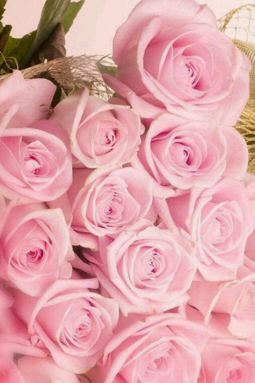 Chaque roses est différente mais elles ont tous un truc exceptionnel ?