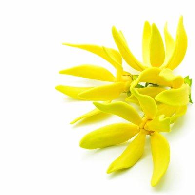 #Beauté et #nature : l'huile essentielle d'Ylang-Ylang